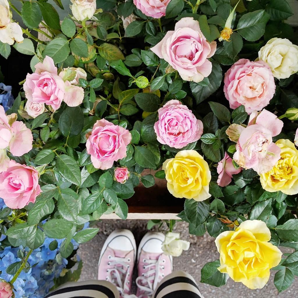 roses-at-daisies