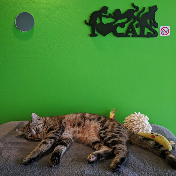 Brussels Cat Cafe