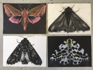 'Nature of the Beast' at Sarah Wiseman Gallery @ Sarah Wiseman Gallery | England | United Kingdom