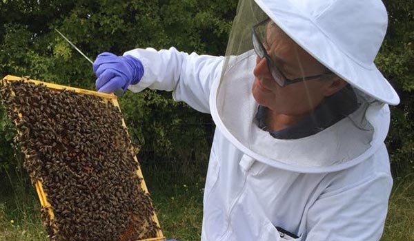Warborough Honey Oxford