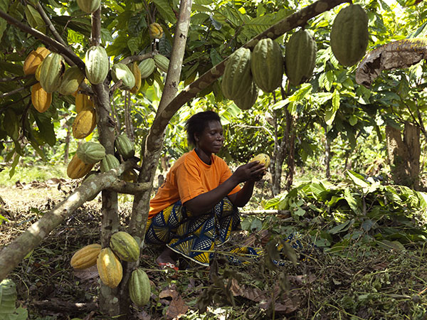 Fairtrade Cocoa Story in the Ivory Coast.