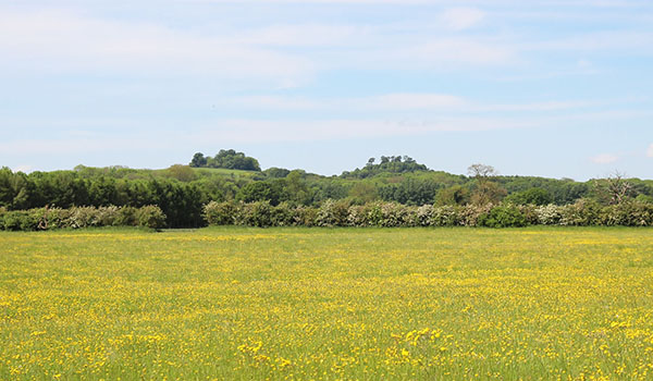 Wittenham Clumps Oxfordshire