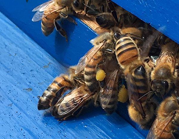 Warborough Honey Oxfordshire