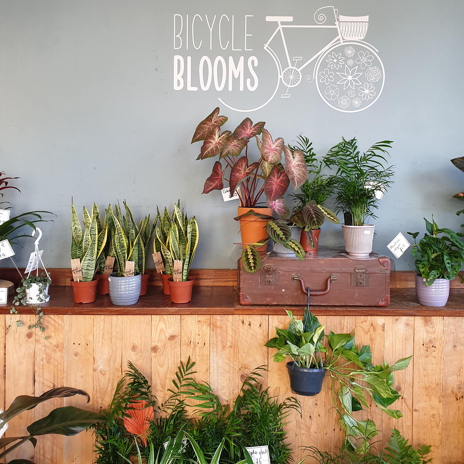 Bicycle Blooms Houseplants