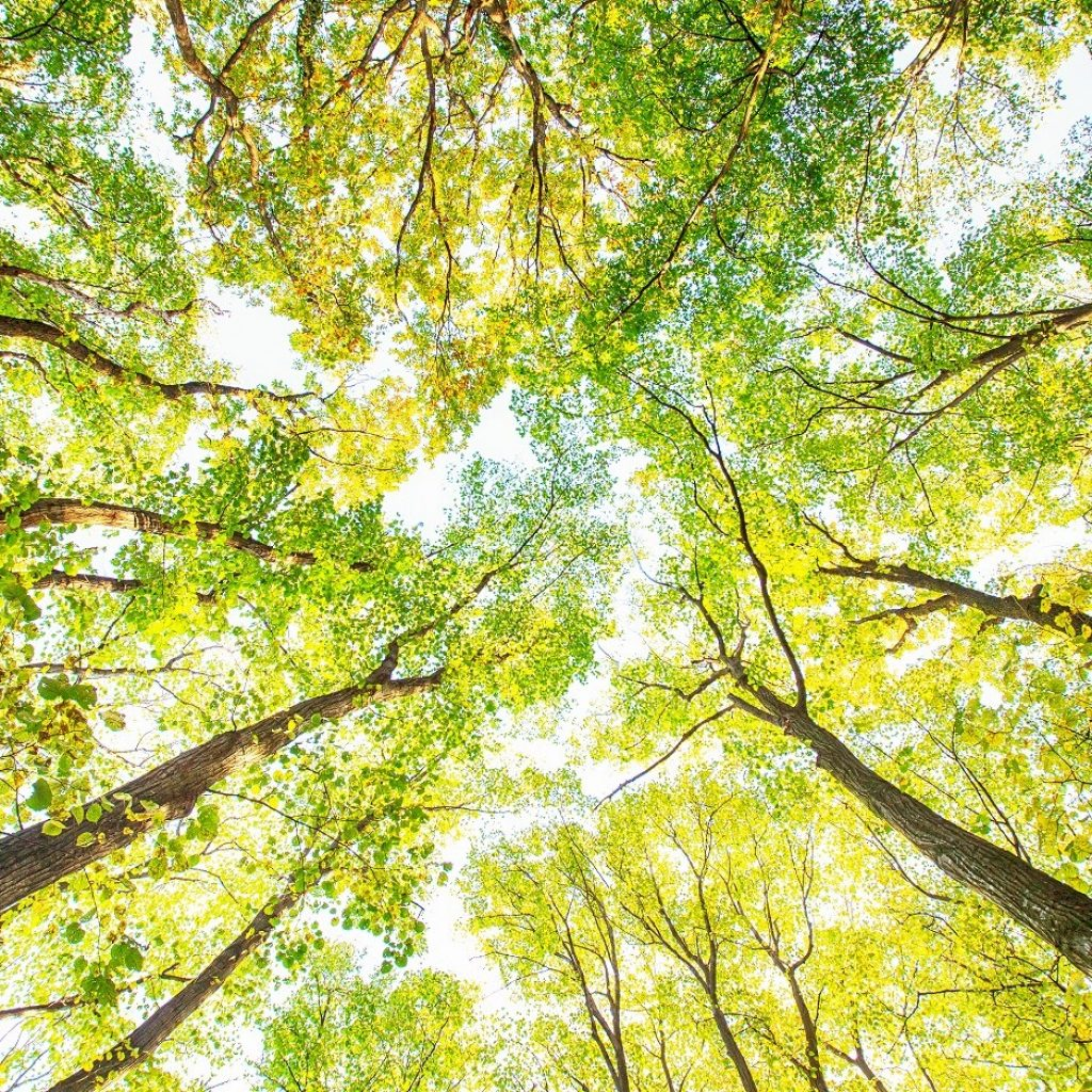 Stock Trees Nature Wellbeing