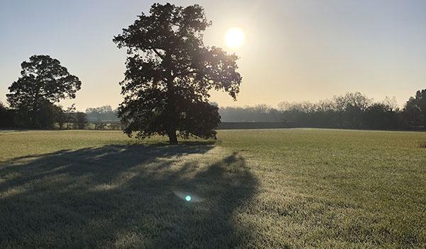 Wandering to Wonder frosty field
