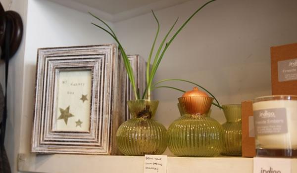 Indigo grow vases