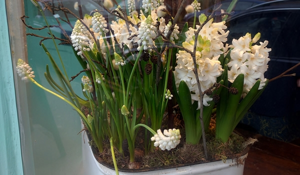 barefoot seasonal flowers