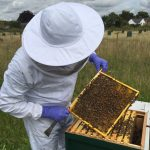 Warborough Honey Oxfordshire