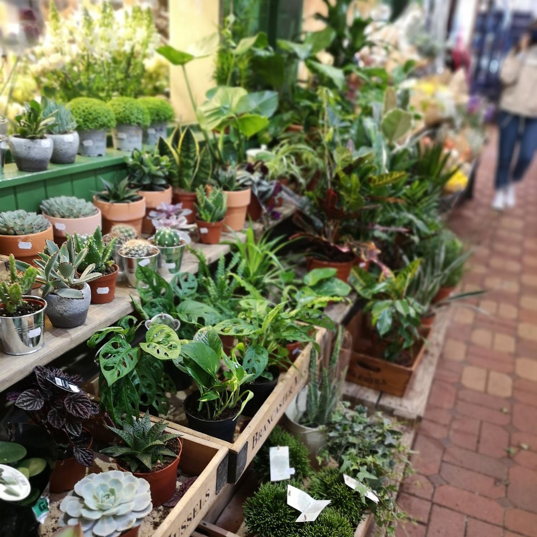 Houseplants The Garden Oxford