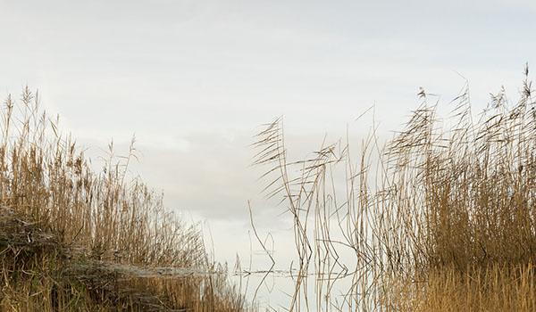 Amanda Harman, Open water, Westhay Moor