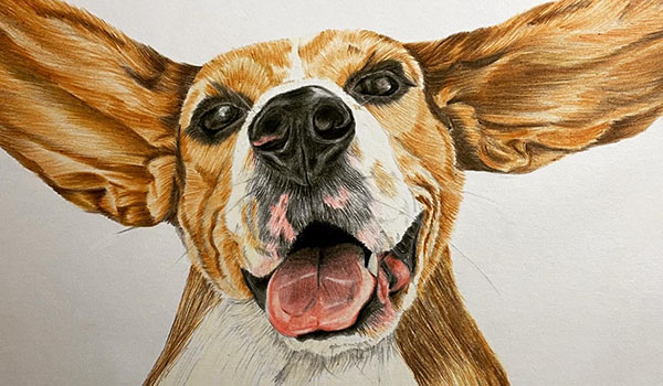 Liz Corley Art Oxford Dog Painting