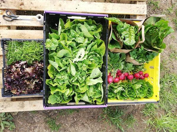 Wilding Oxford fresh veg